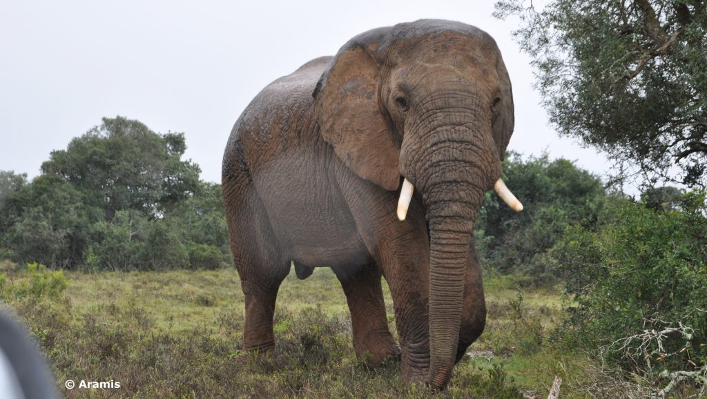 Addo Elephant National Park 2