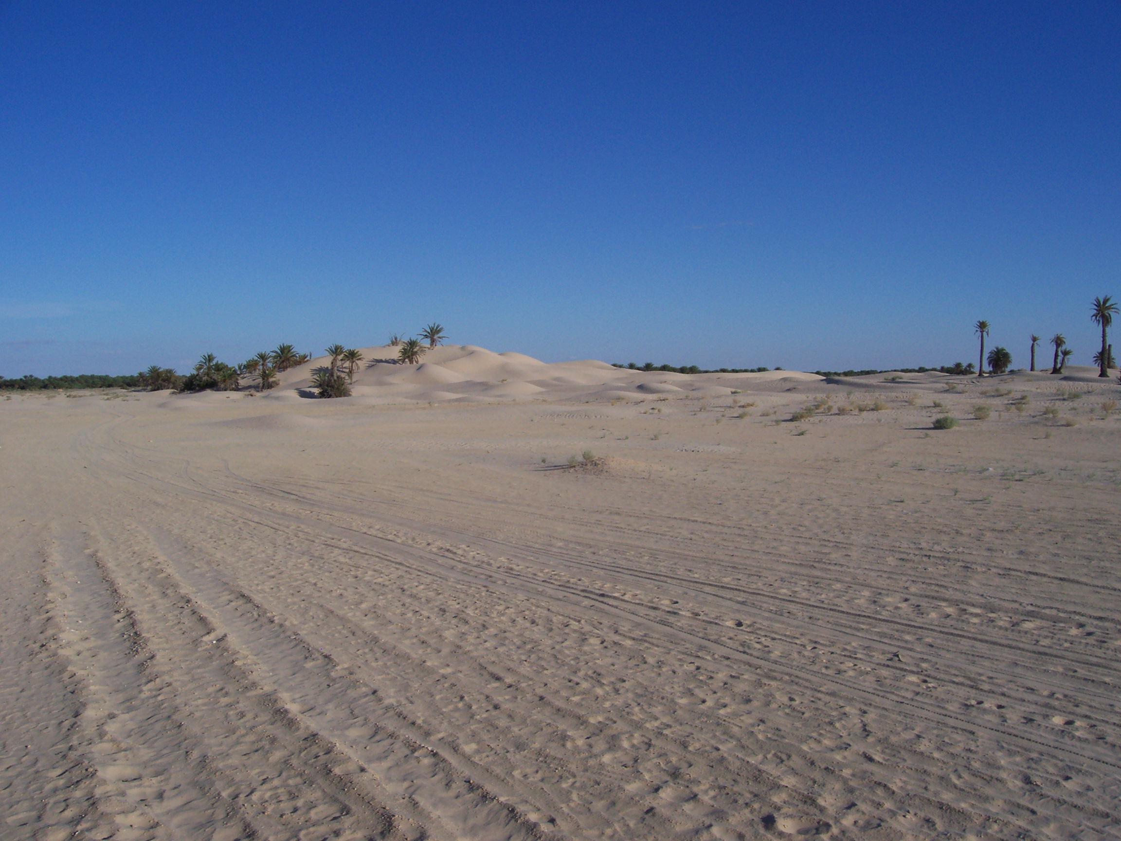 Dune_Zaafrane_Tunisia
