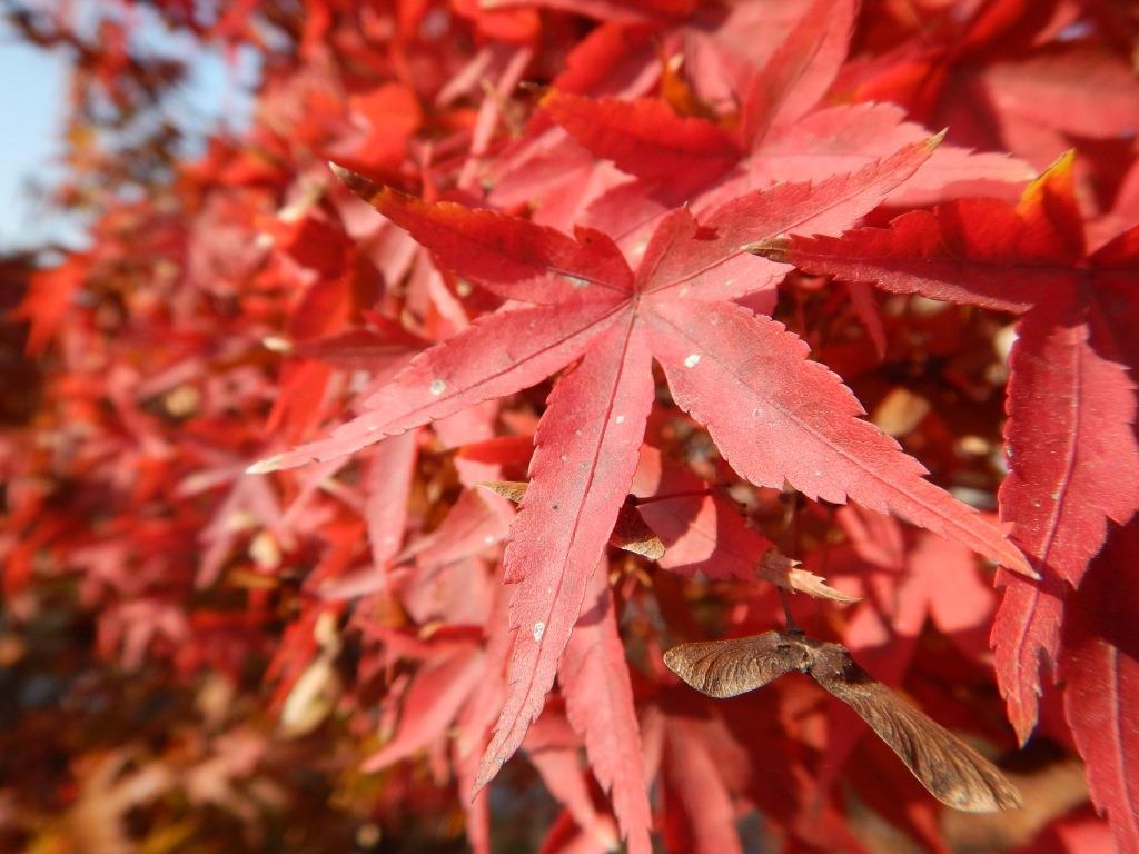 Foliage in Italia 7