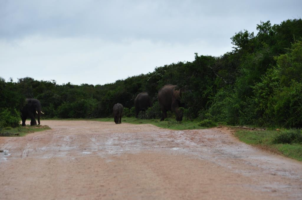 Addo Elephant Park 9