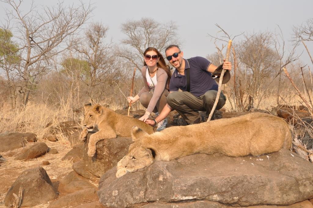 Incontro con i leoni 8