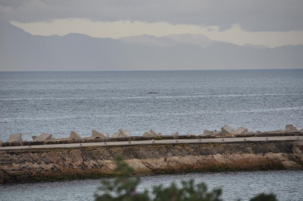 Balena a Muizenberg