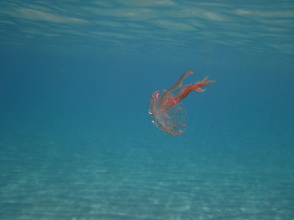 foto subacquee 2