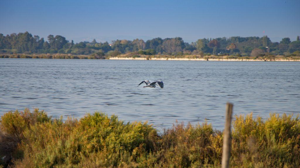 Laguna di Orbetello 2